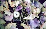 Pocket watch left among flowers