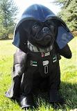 #Dog Vader Puppy