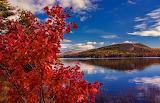 Fall Foliage (4)