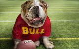 Dog NFL