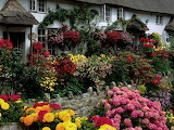 Great flower garden