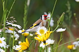 The beauty bird-the putter-in the flowers