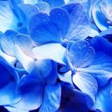 Blue...