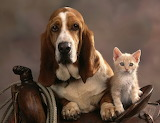 Dog and cat in the saddle