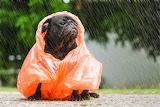 Soaking wet or this raincoat?