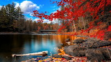 Vunature.com-lakes-nature-autumn-leaves-fall-forest-tree-landsca