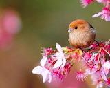 Little Bird...