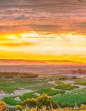 McLaren Vale vineyard South Australia