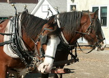Clydesdales 72 dpi