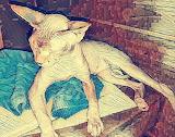 Veikko in the sauna
