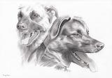 Hunde gezeichnet