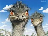 Cal 2006 03 KevinStead Emu