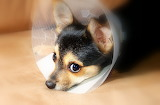 Puppy-recovery-