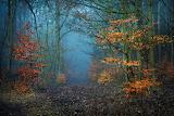 "Landscape tumblr dogstardreaming ""Magical Forest"" ""Radoslaw Dran"