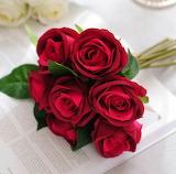 Belles roses rouges
