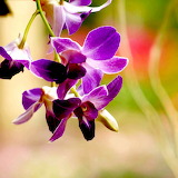 * Purple Orchid...