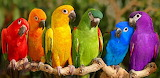 Rainbow of Colorful Parrots