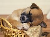 Tiene sueño