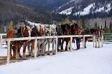 Horses-snow-mountain-ranch