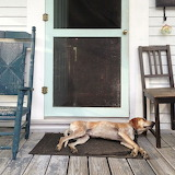 Maddie The Coonhound-Country Dog
