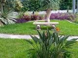 Strelizie im Garten