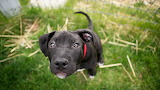 dogs_puppies