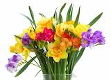^ Freesia Daffodils Bouquet