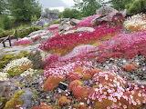 Botanic Garden Tromsø Norway CC0