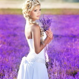 Lavender Beauty...