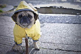 For when it's wet outside