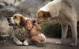 Dogs and child