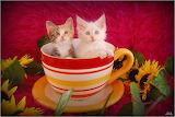 Kitten Soup...