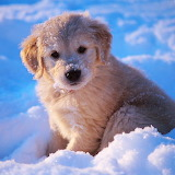 Puppy in the Snow...