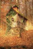 Thoreau's cabin, Emerson woods
