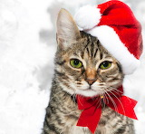*Christmas Kitty Cat...