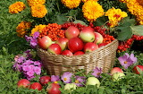 Apples, flowers, basket, harvest, marigolds