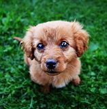 Animal-cute-pup