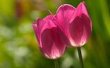 Flower garden plant (339)