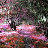 Covered Path