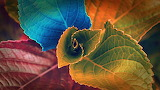 ☺ Colorful leaves...