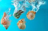 DivingShells