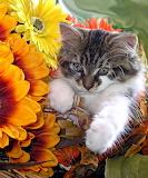 ☺ So cute...