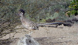 If This Is The Roadrunner; Where's Coyote?