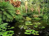Flowers - Hawaii Tropical Garden