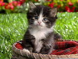 Cute-baby-kittens-pictures