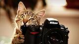 Cat taking pics of his hooman