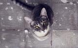Look-eyes-cat