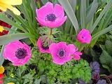 Flower83