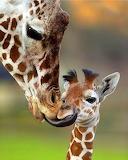 Mom, pleeease...!