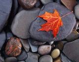 Autumn On The Rocks